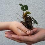 Pflanzentauschbörse1